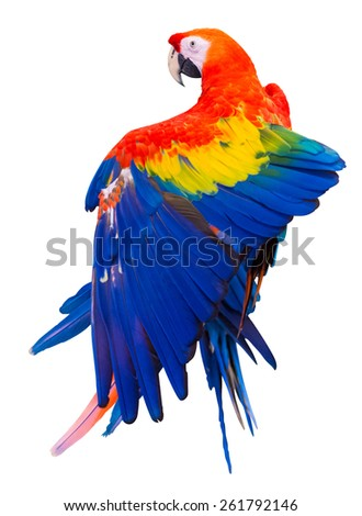 Colorful red parrot macaw on white background with clipping path - stock photo