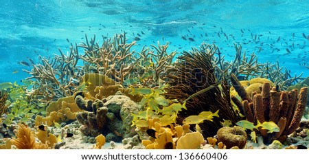 colorful reef - stock photo