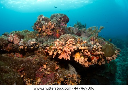 Colorful reef deep in Indian ocean. Indonesia.Bali