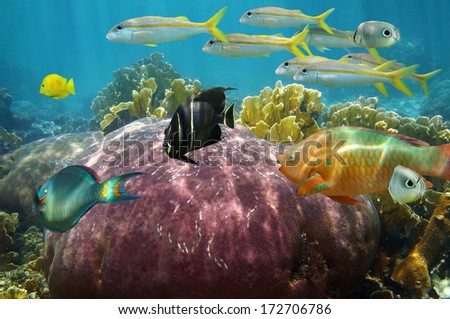 Colorful reef fish undersea with beautiful coral, Caribbean sea - stock photo