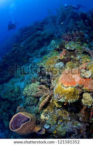Colorful Reef in St Lucia - stock photo