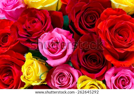 Colorful roses background - stock photo