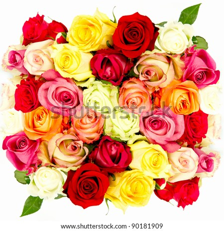 colorful roses, beautiful flower bouquet on white background - stock photo