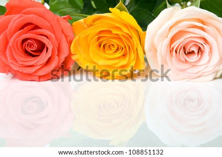 Colorful roses on the reflecting surface - stock photo