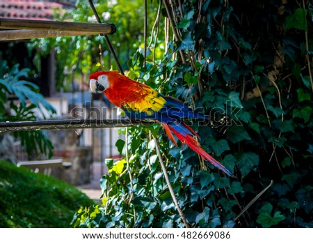 Colorful scarlet macaw