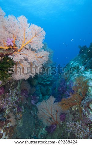 Colorful sea fan reef canyon with soft and hard corals in the Andaman Sea, Indian Ocean, Thailand. - stock photo