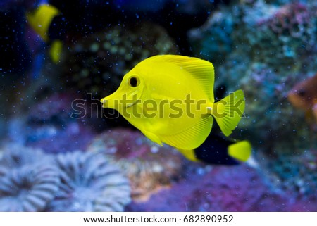 Colorful sea fish,Marine fishes in aquarium,Sebae clownfish, Amphiprion sebae,colorful of coral with beauty butterfly fish cartoon fish in clear aquarium, Photo of a tropical Fish on a coral reef.