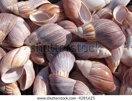 Colorful sea shell - stock photo