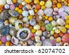 colorful sea shells background - stock photo