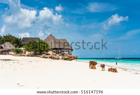 colorful seascape with african cows and huts with thatched roofs on the beach