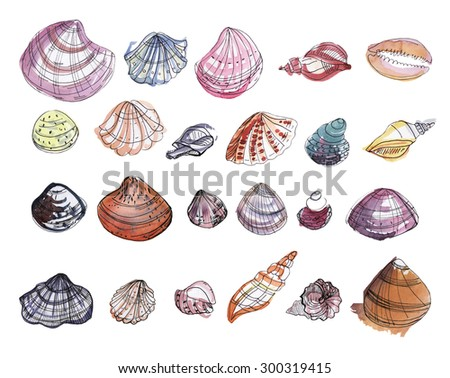 Colorful set of watercolor seashells. Hand drawn elements for your design.
