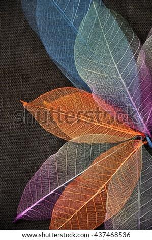 Colorful skeleton leaves in flower shape on dark background - stock photo