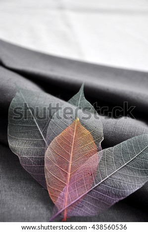 Colorful skeleton leaves put on gray fabric - stock photo