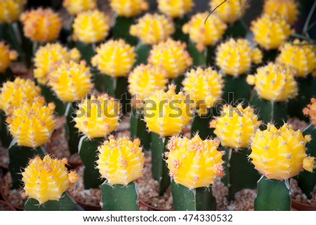 Colorful small cactus is beautiful  in the garden.