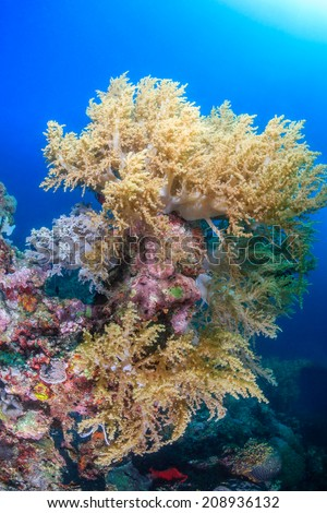Colorful soft corals on a tropical coral reef - stock photo