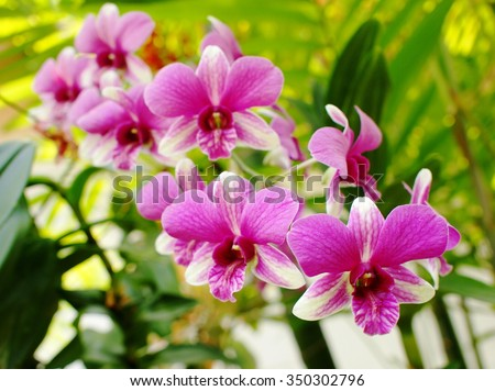 colorful soft pink orchids on a hanging ceramic pot under natural lighting outdoor with romantic green bokeh background - stock photo