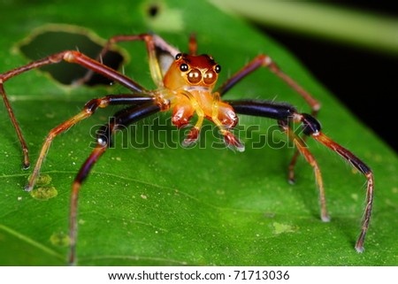 colorful spider - stock photo