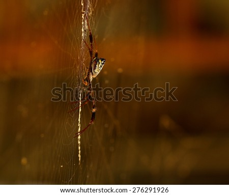 colorful spider resting on the web.