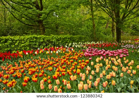 Colorful spring flowers and blossom in dutch garden Keukenhof, Netherlands - stock photo