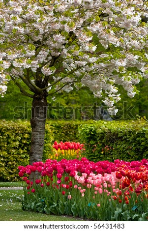 Colorful spring flowers and blossom in dutch spring garden 'Keukenhof' in Holland - stock photo
