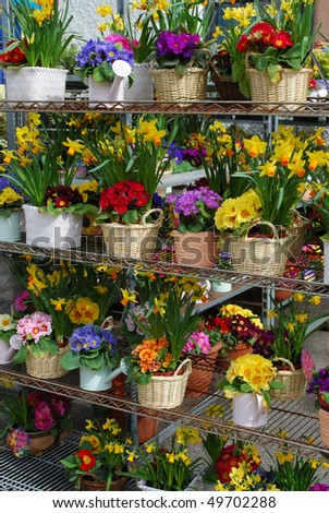 Colorful spring flowers at the market