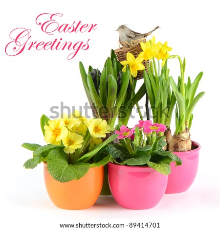 colorful spring flowers. easter decoration. hyacinth, pink primulas, yellow daffodils