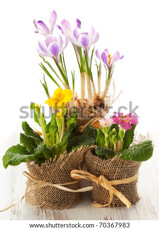 Colorful spring flowers in pots. - stock photo