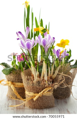 Colorful spring flowers in pots.Narcissus,primula,crocus,freesia, violet - stock photo