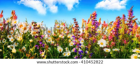 Colorful spring flowers on a meadow in panorama format, with the blue sky and white clouds in the background - stock photo