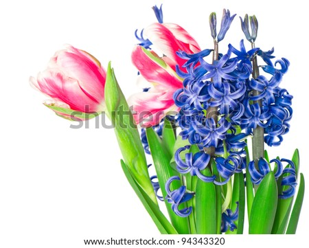 colorful spring flowers. tulips and hyacinth over white background - stock photo