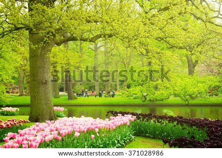 Colorful spring lawn with black and pink tulips  in  garden Keukenhof, Holland, toned - stock photo