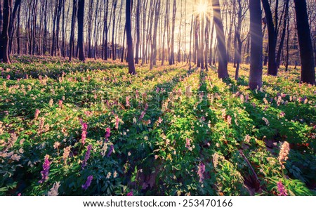 Colorful spring morning in the forest. Instagram toning. - stock photo