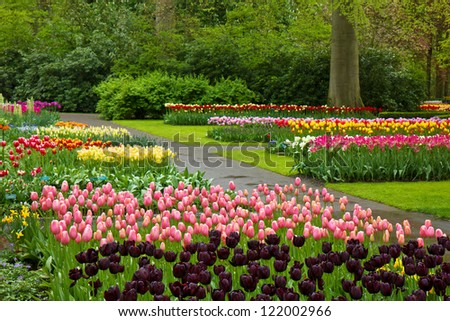 Colorful spring tulips blossoming in dutch garden 'Keukenhof', Holland - stock photo