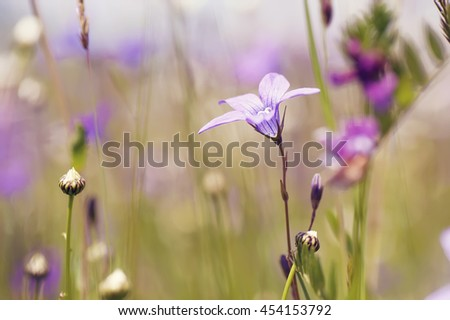 colorful summer flowers on sunny rural field. natural vintage ba