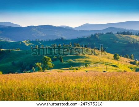 Colorful summer morning in the mountains - stock photo