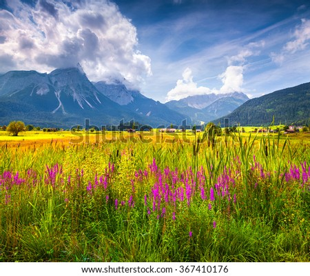 Colorful summer view of blossom valley of Zugspitze Golf club near Lermoos village in the Austrian Rhaetian Alps. Tirol, Austria, Europe.  - stock photo