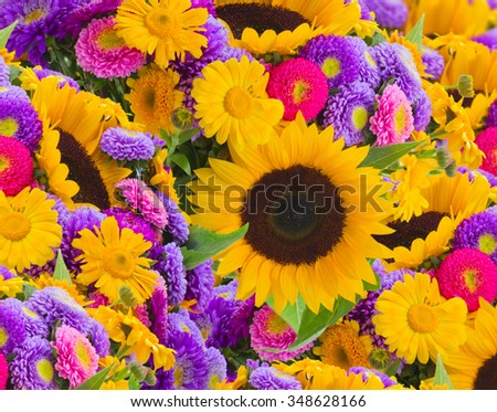colorful  sunflowers and mums flower background - stock photo