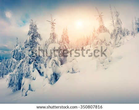 Colorful sunrise scene in the misty mountain forest. - stock photo