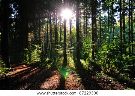Colorful sunset in the woods. - stock photo