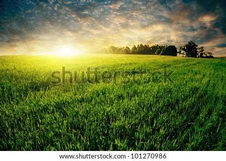 Colorful sunset over green grass field. - stock photo