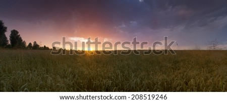 Colorful sunset over wheat field.  - stock photo