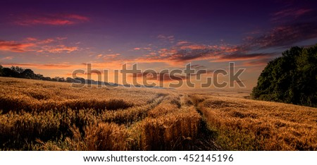 Colorful sunset over wheat field. golden ears of wheat or rye on sky background with clouds, under the influence of sunlight. Rich harvest Concept. majestic rural landscape. - stock photo