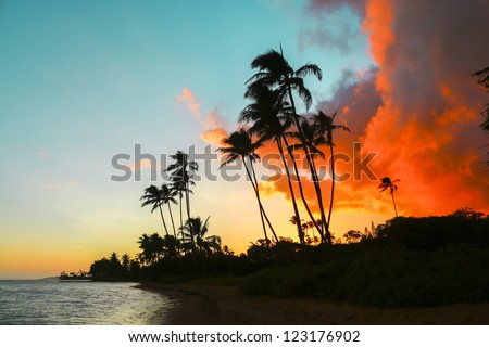 Colorful sunset with palm trees on beach in Hawaii - stock photo