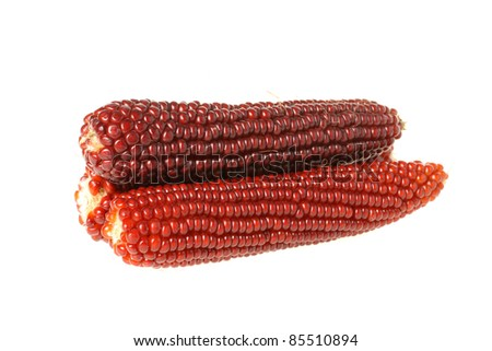 Colorful traditional Thanksgiving corn, isolated on white - stock photo