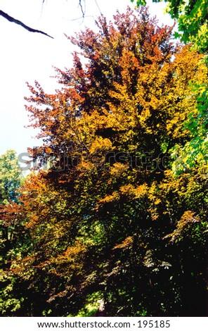 Colorful tree - stock photo