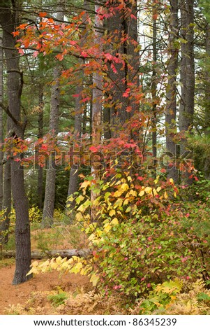 Colorful trees in Algonquin Park