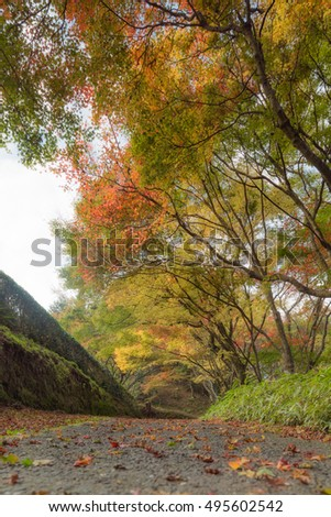 Colorful trees in autumn and a footpath leading into the scene