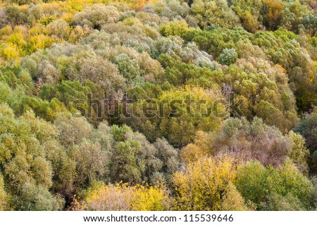 Colorful trees. top view.