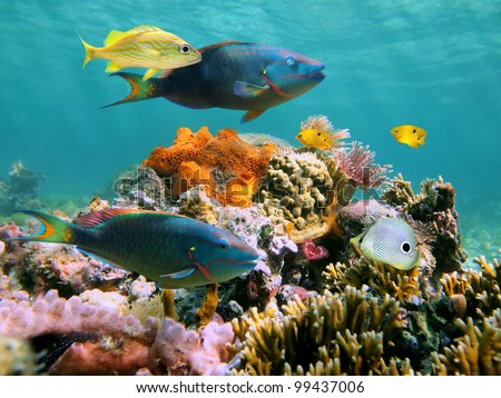 Colorful tropical fish and marine life in a coral reef - stock photo