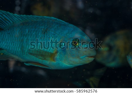 Colorful tropical fish close up
